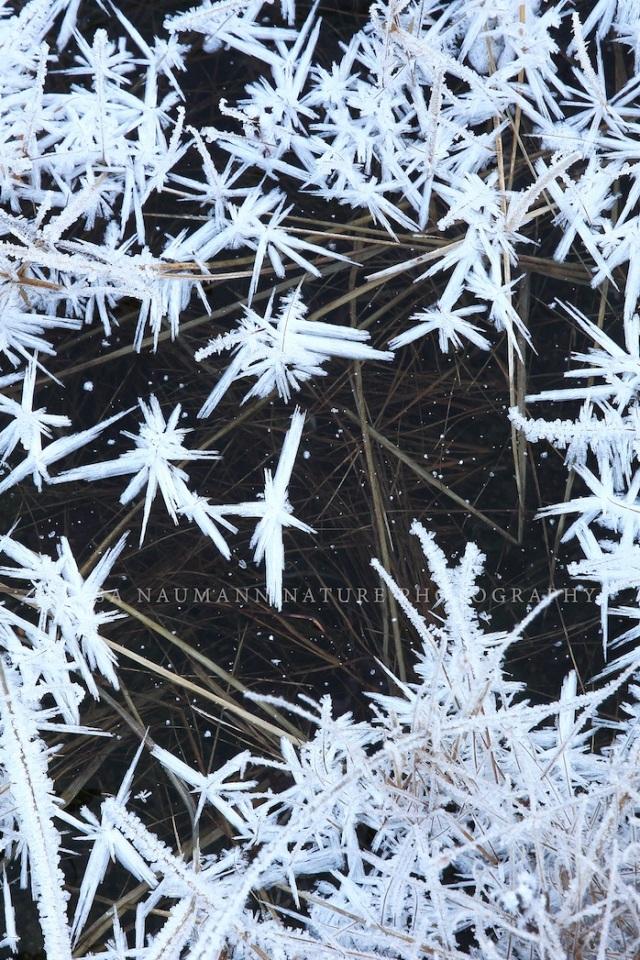 Frost WM copy