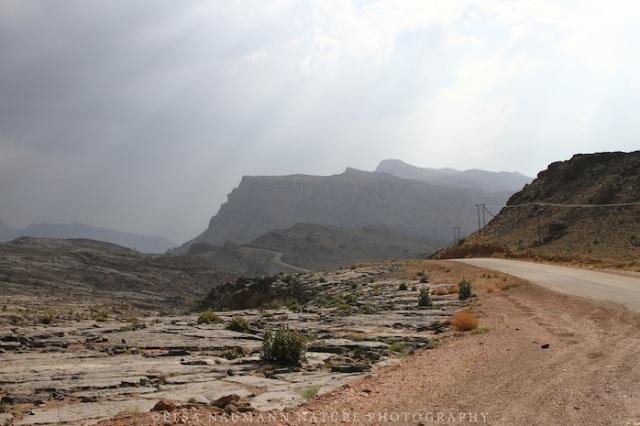 Jebel Akhdar 11 WM S