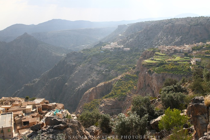Jebel Akhdar Green WM copy