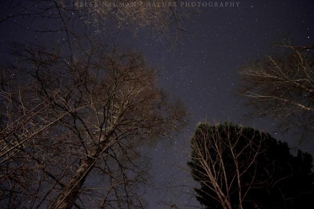 Nov night WM 2